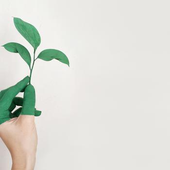 Je kantoor verduurzamen: wat zijn de opties?
